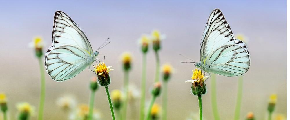butterflies as a symbol to digital transformation