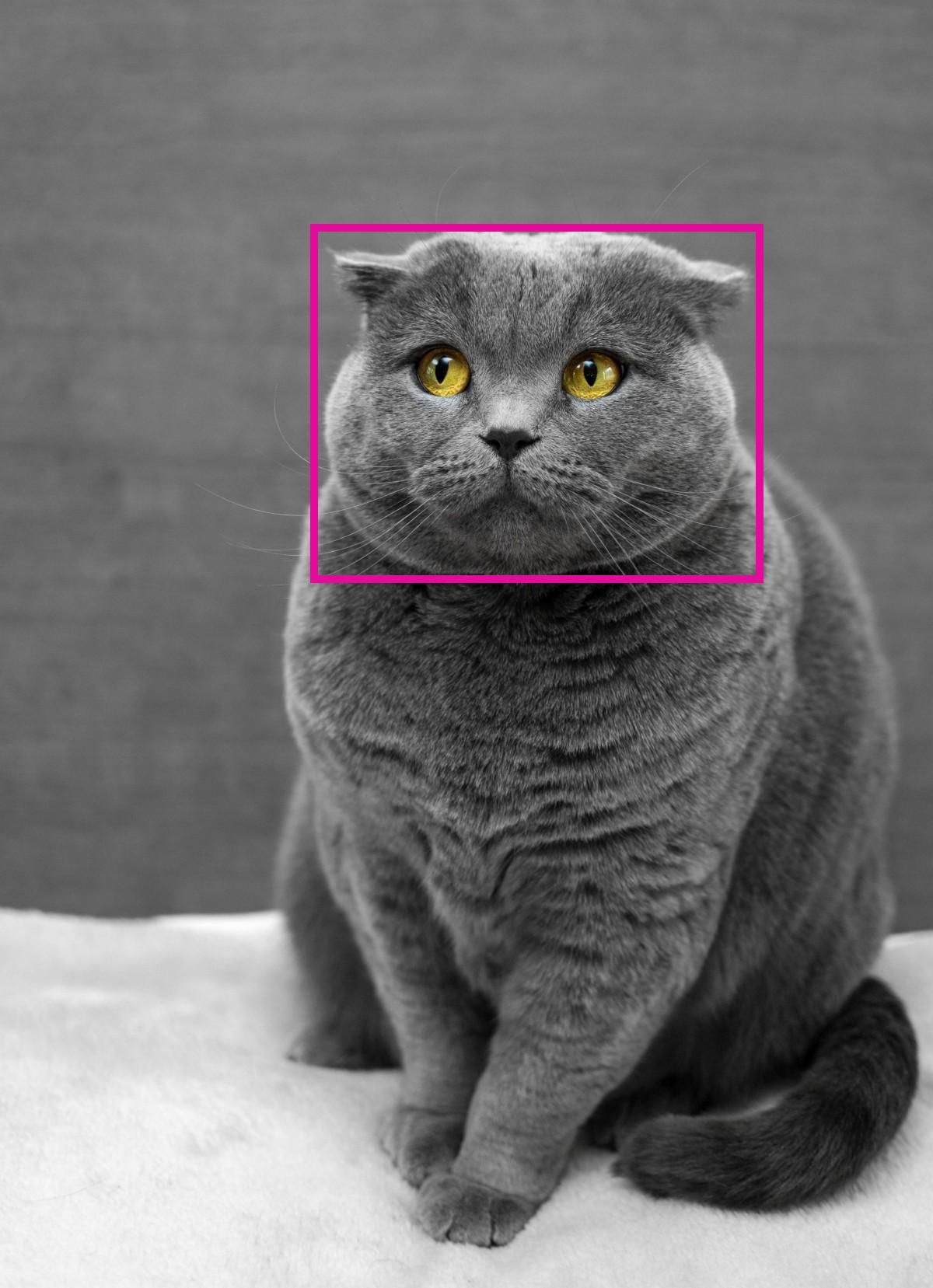 cat_labelling